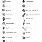 Hindustan-Plants-Vol2_Seite_007