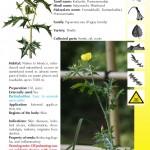 Hindustan-Plants-Vol2_Seite_025