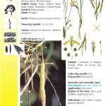 Hindustan-Plants-Vol2_Seite_048