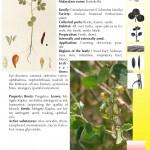 Hindustan-Plants-Vol2_Seite_103