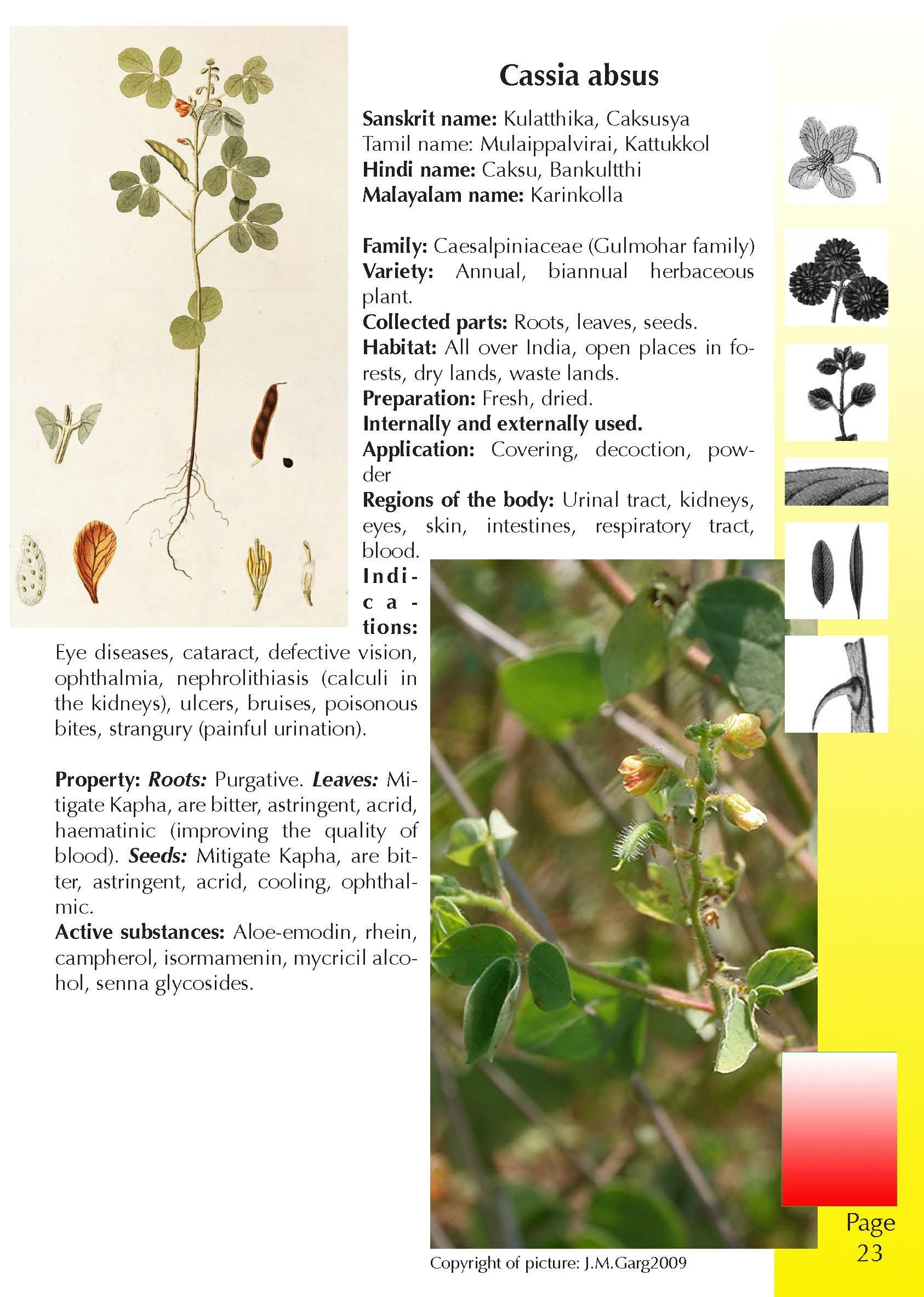 Recognise Ayurvedic Healing Plants | WiethaseVerlag
