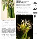 Hindustan-Plants-Vol2_Seite_107